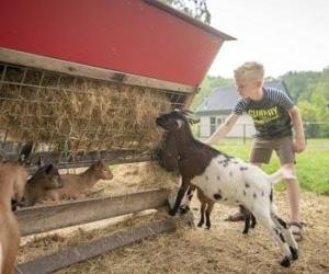 bungalowpark-bosmeer-friesland-kinderboerderij-voordelig