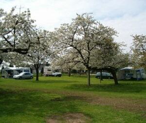 bonenkamp-mini-camping-gelderland-klein