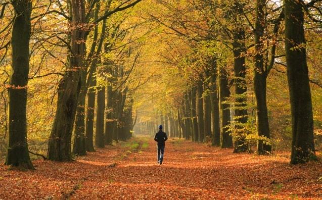 drenthe-herfst-wandelen-vakantie