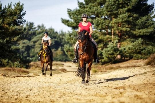 paardrijden-drenthe-bos-info