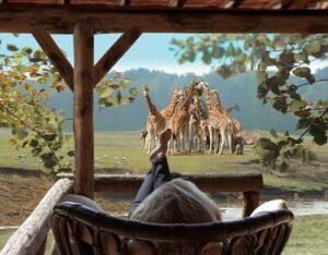 vakantiepark-beekse bergen-noord-brabant-dieren