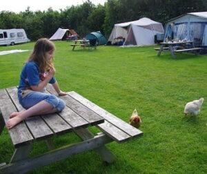 camping-hoge-kamp-texel-boerderij