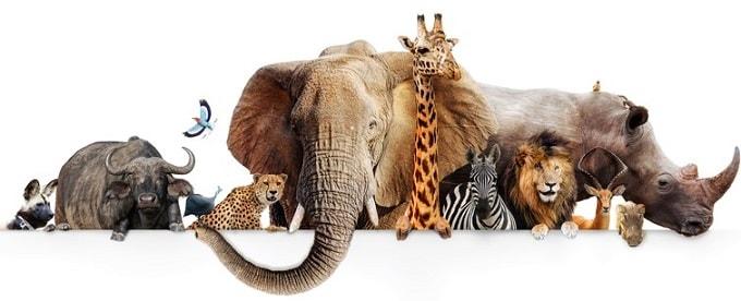 dierentuinen-nederland-overzicht-info-tickets