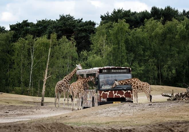 safaripark-beekse-bergen-entree-tickets-online