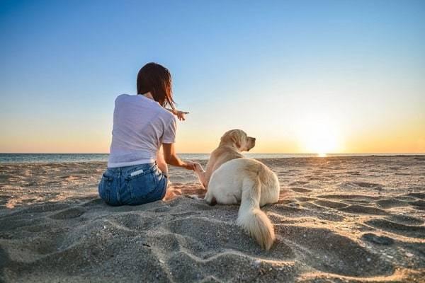 campings-noord-holland-hond-huisdier-reserveren