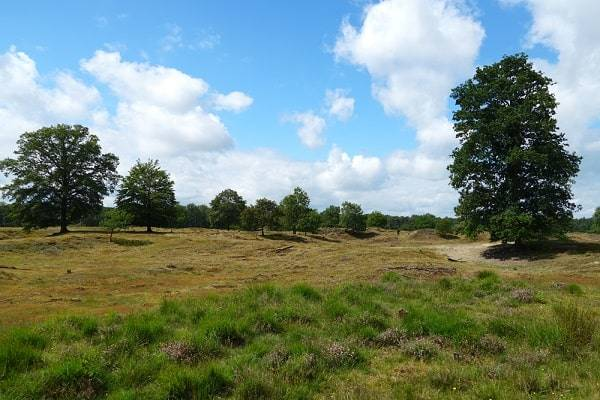 drents-friese-wold-natuurgebieden-friesland
