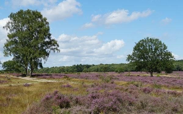 natuurgebied-heide-noord-holland-bezienswaaardigheden